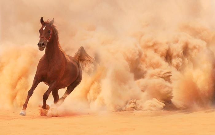 бег лошади