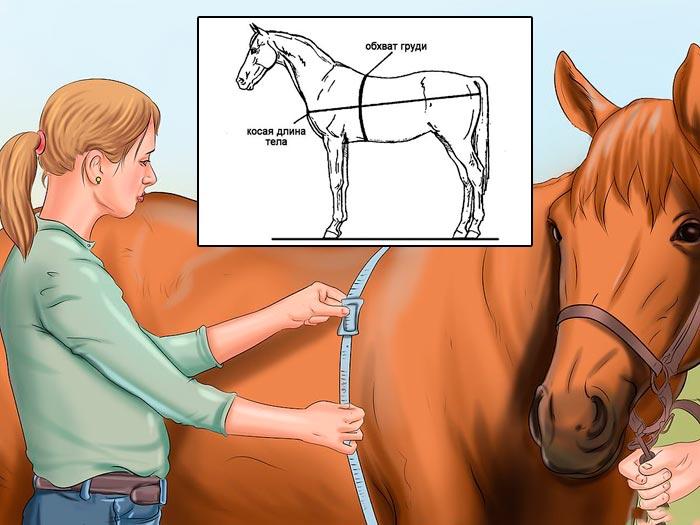 измерение параметров лошади