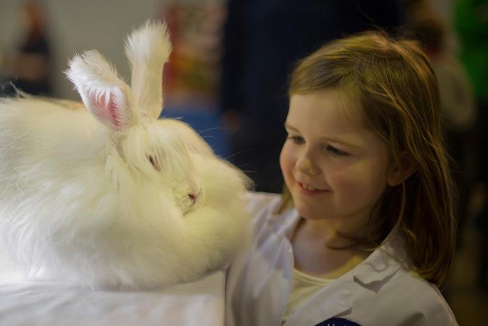 гладит кролика