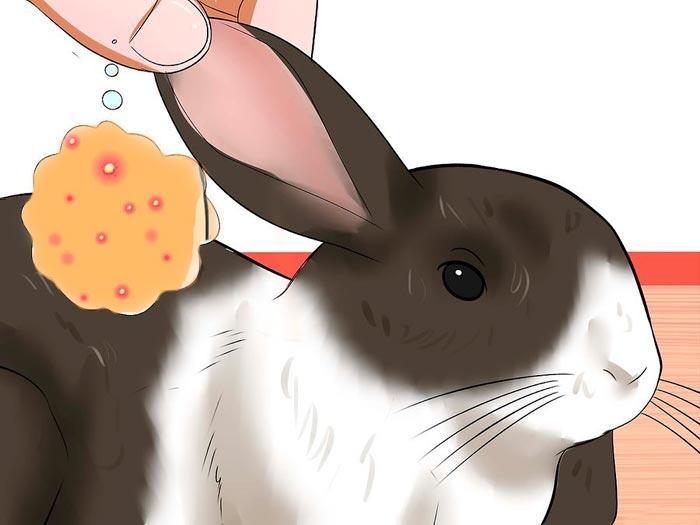 болячки в ушах у кролика