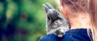 кролик на плече