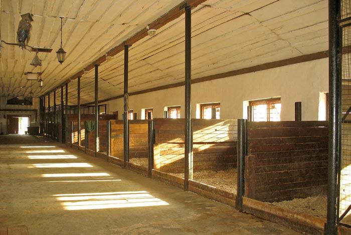 стены в конюшне