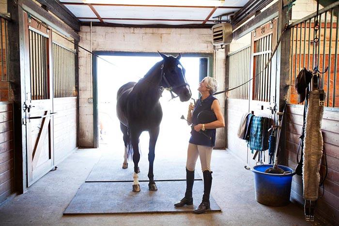 конь в конюшне