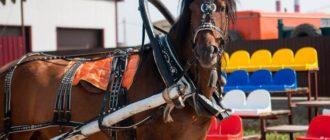 лошадь в телеге