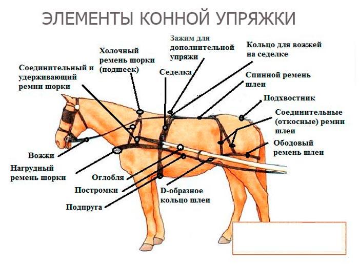 элементы конной упряжки