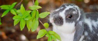 кролик ест веточку