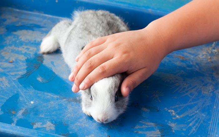 приручение кролика