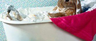 кролик купается