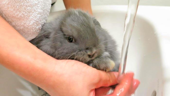 кролик моет лапки