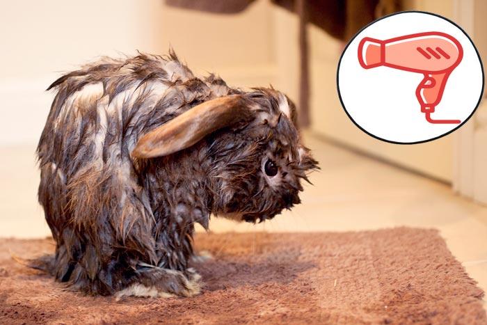 мокрый кролик