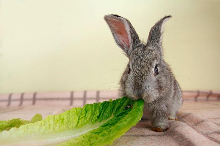 кролик и капустный лист