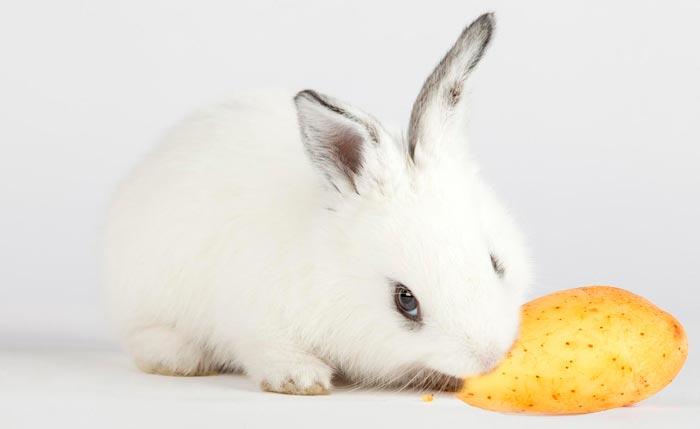 кролик ест картофель