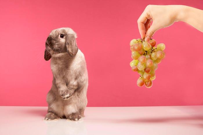 кролик и виноград