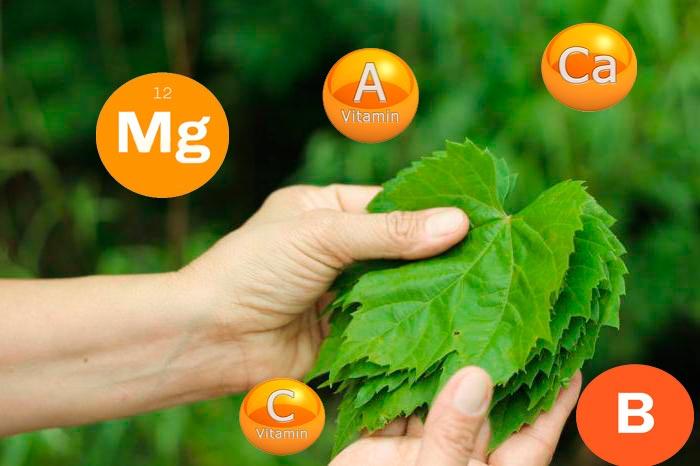 витамины в листьях винограда