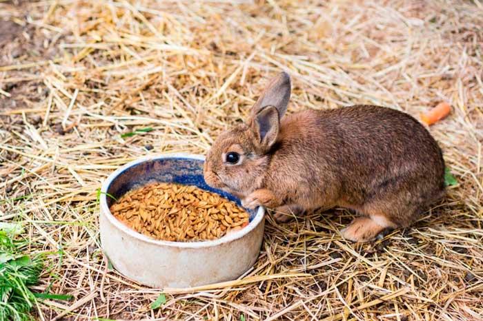 кролик ест пшеницу