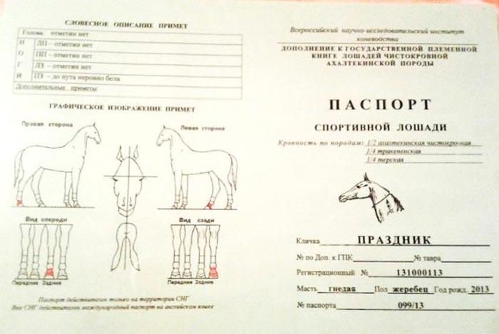 паспорт коня