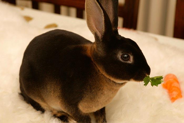 кролик ест травку