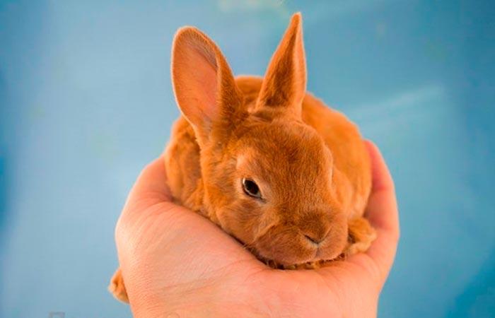 кролик на ладони