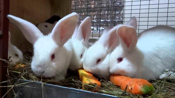кролики едят морковку