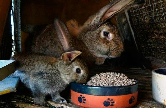 крольчиха и кролик