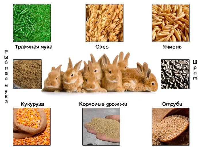 состав корма