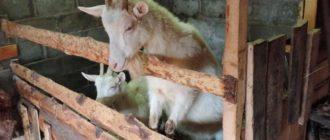 козы в сарае