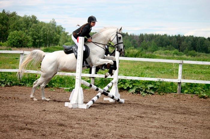 тренирует коня