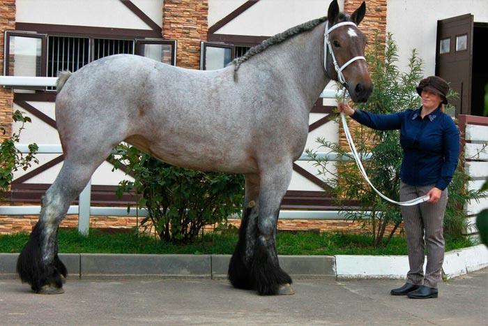 женщина и конь