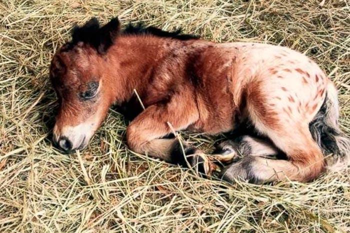 новорожденный жеребенок