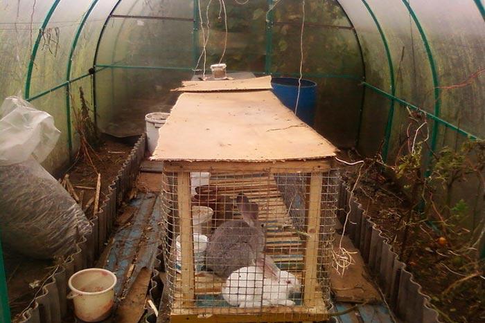 крольчатник в теплице