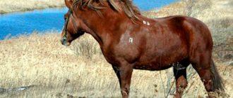 лошадь битюг