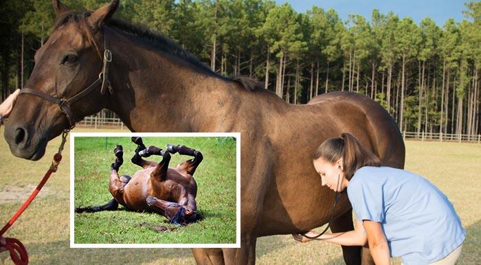 лечение колик у коня