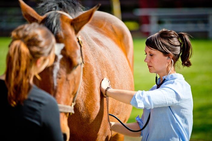 ветеринар осматривает коня