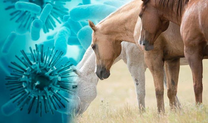 грипп у лошадей