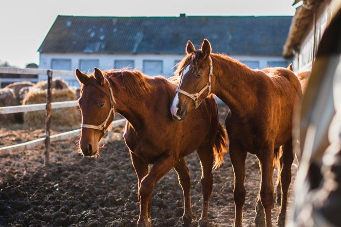 кони породы дончак
