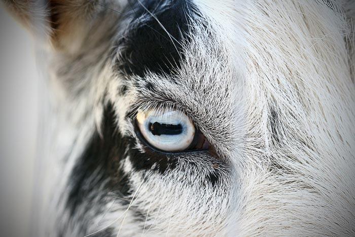 узкий глаз при ярком свете