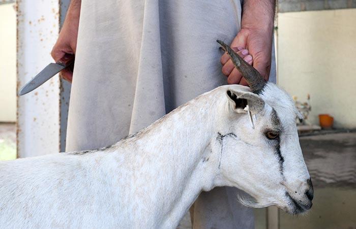 держит козу