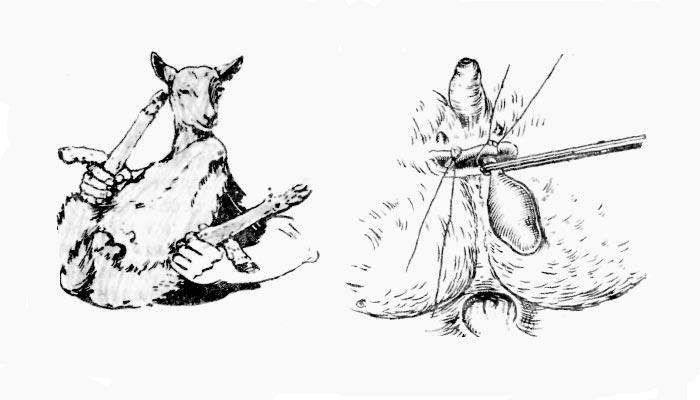 удаление половых органов козла