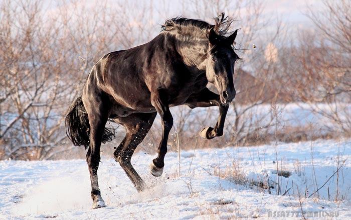 лошадь в снегу
