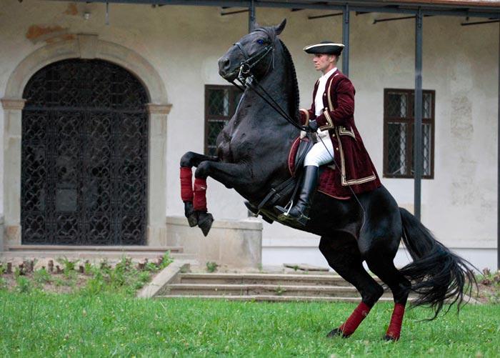 наездник на лошади