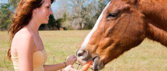 девушка кормит лошадь