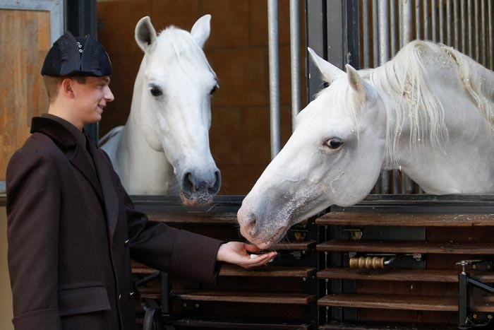 подкормка лошади