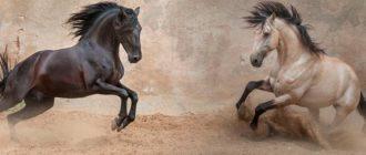 лошади лузитано
