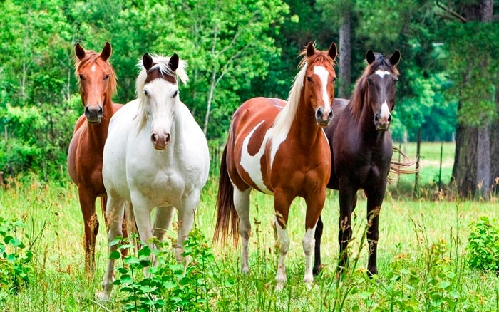 лошади разной масти