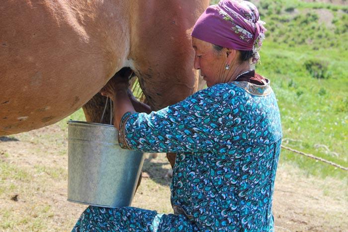 дойка лошади