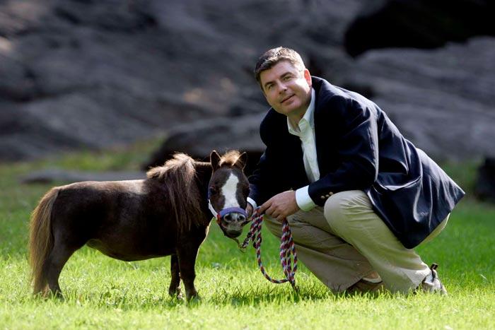 лошадь тамбелина