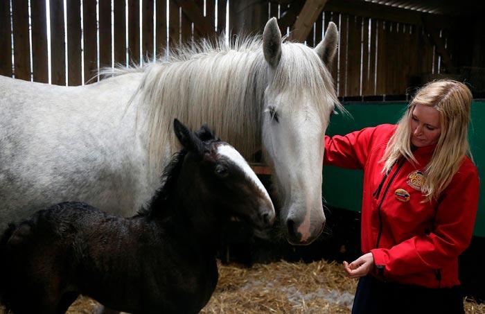 приручение лошади