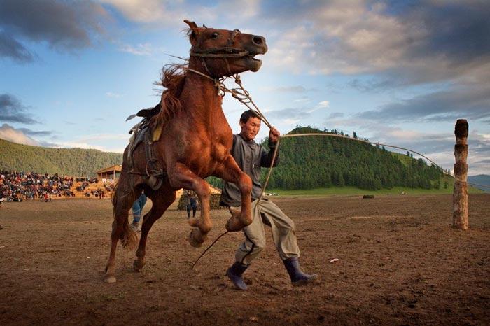 объездка коня