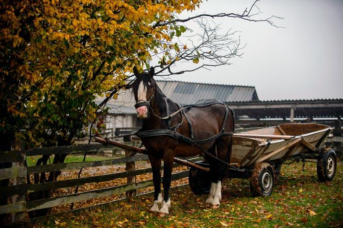 лошадь с телегой