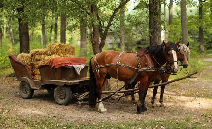 лошади перевозят сено